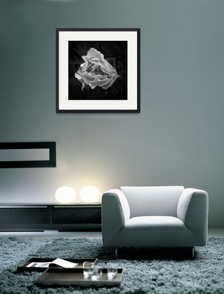 """Peony In Black And White&quot  (2011) by bavosiphotoart"
