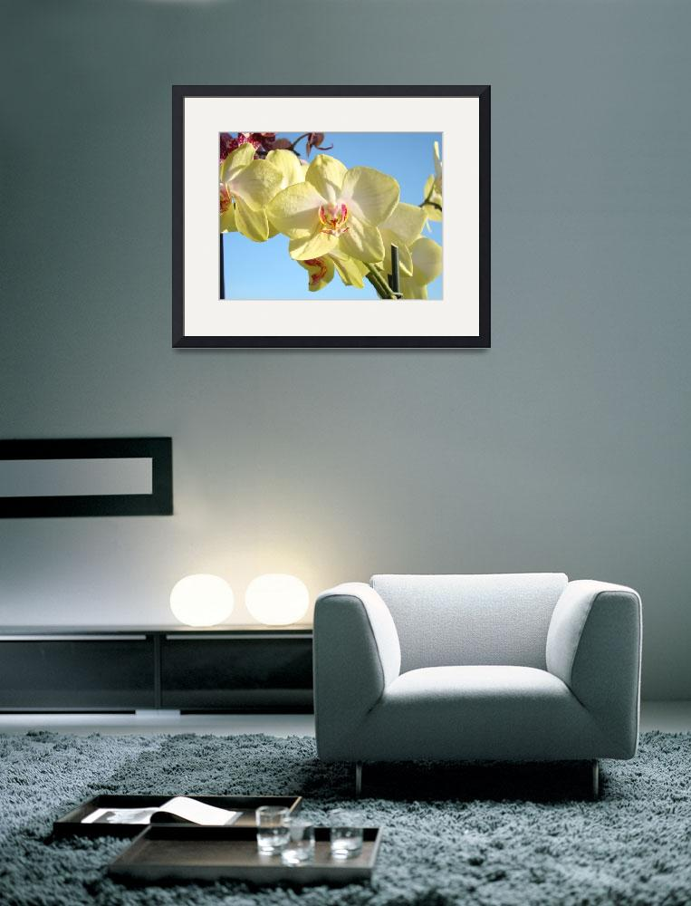 """Orchids Flowers art prints Orchid Floral&quot  (2014) by BasleeTroutman"