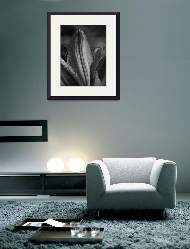 """Lily Petal - Grainy Black and White&quot  (2011) by PurpleSkyPhoto"