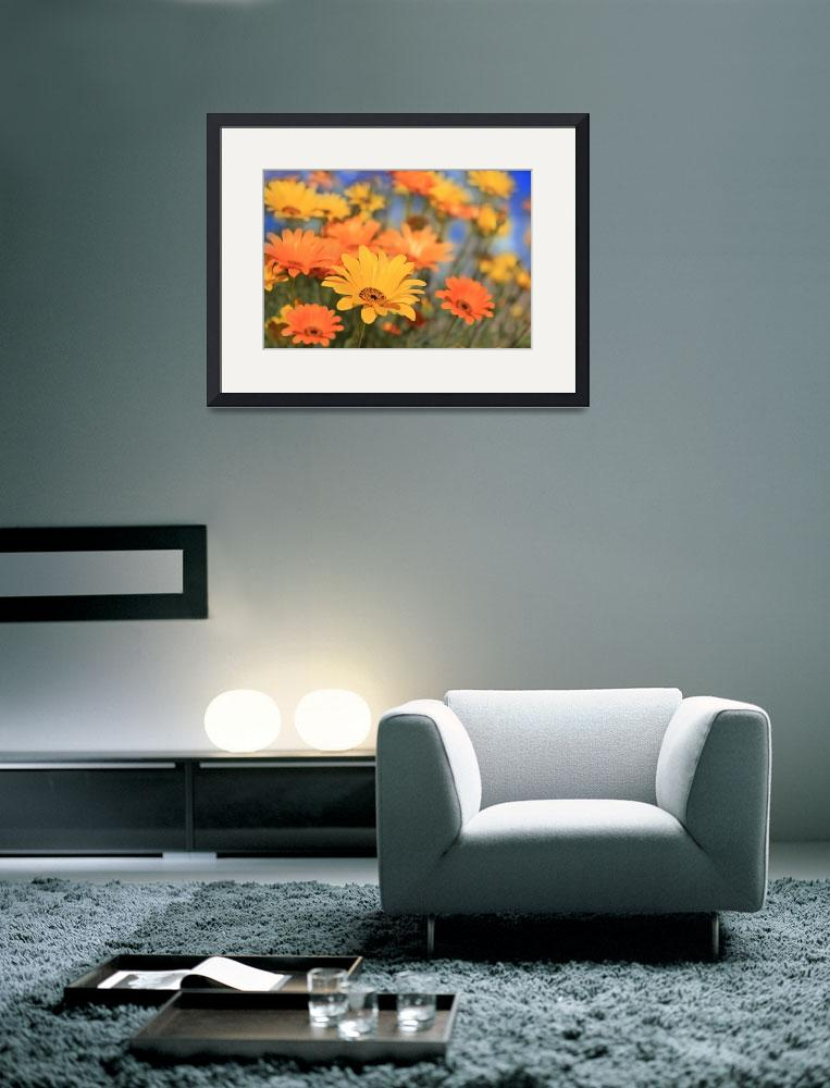 """""""African Daisies""""  (2013) by charker"""