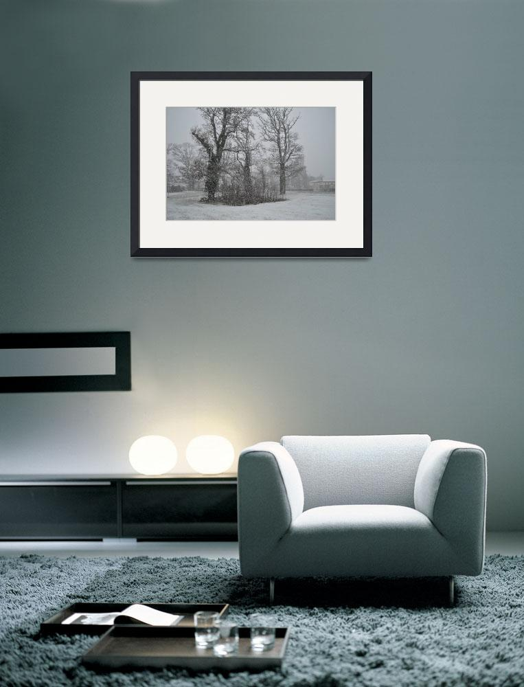"""""""Winter Trees""""  (2010) by DamianSynnott"""