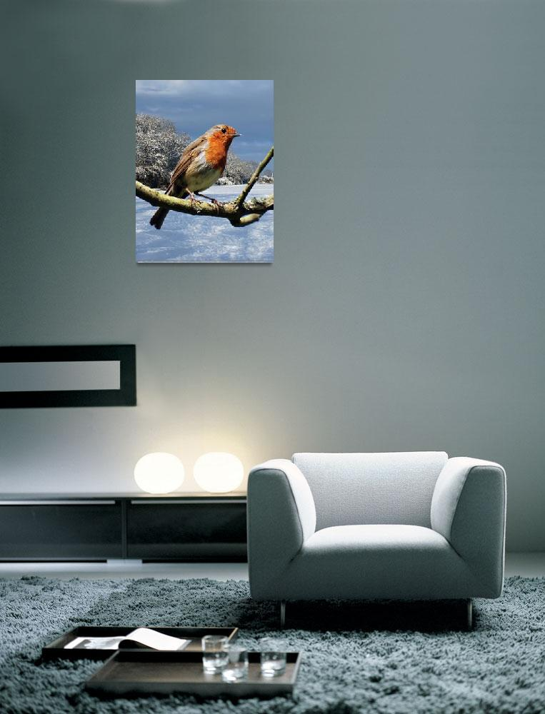 """Robin In Winter&quot  (2010) by Paul_Rumsey"