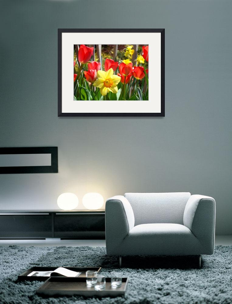 """Spring Daffodils Flowers art prints Red Tulips""  (2014) by BasleeTroutman"