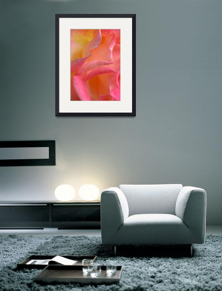 """""""""""Hot Pink Yellow Rose 3"""" #7070513&quot  (2013) by achimkrasenbrinkart"""