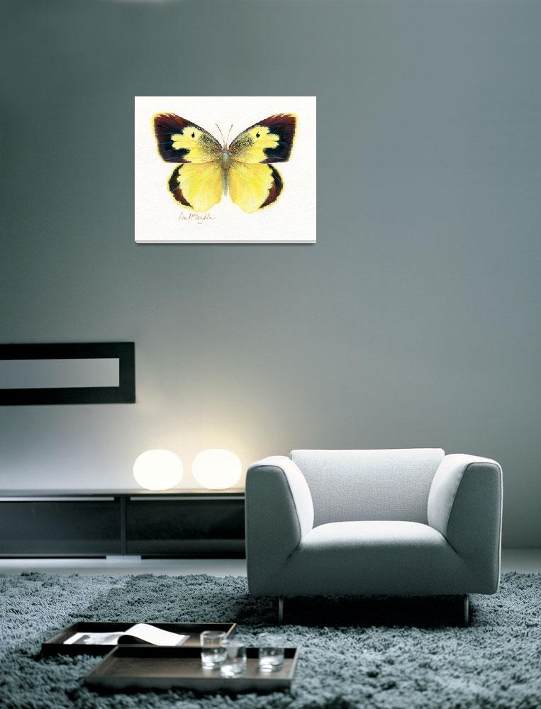 """Dogface butterfly""  (2008) by LisaMclaughlin"