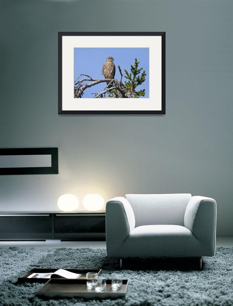 """""""Pigeon Hawk Sits On A Tree Branch In Turnagain Pas&quot  by DesignPics"""