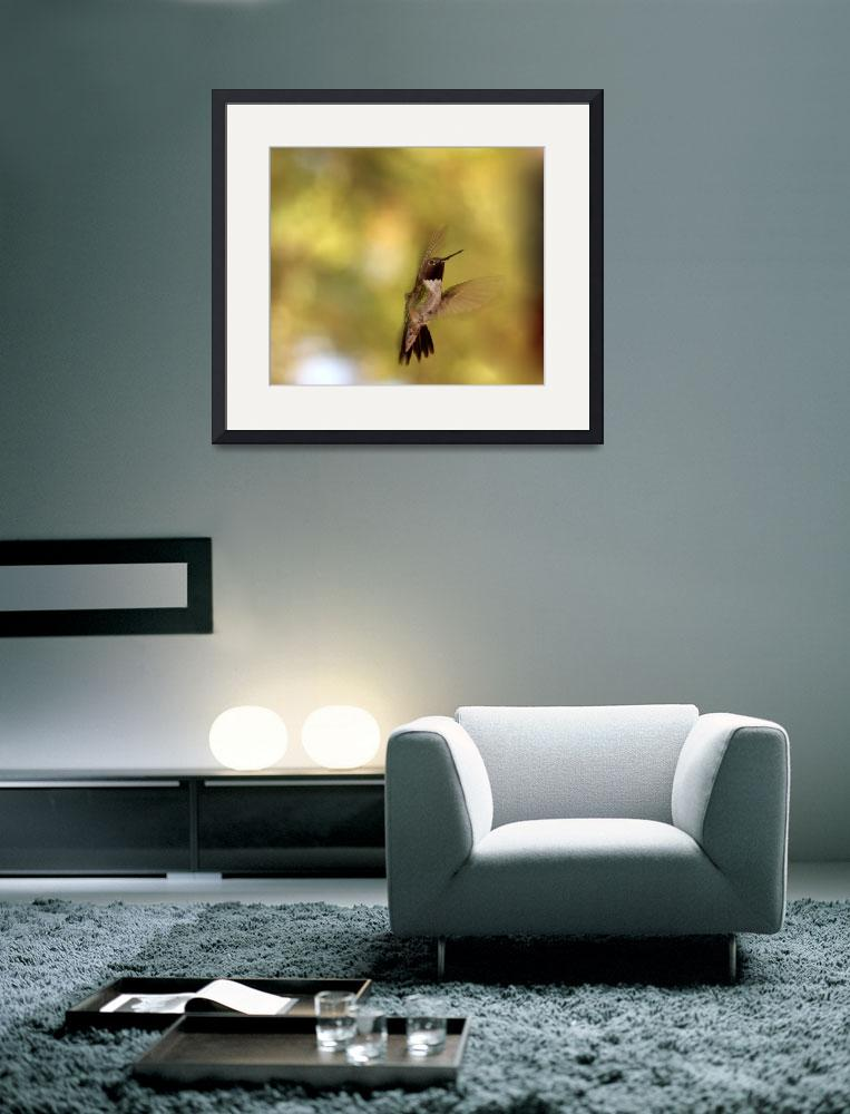 """""""Broad Tailed Hummingbird 1218&quot  (2011) by rayjacque"""