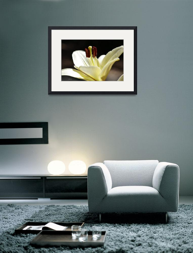 """""""White Regal Lily&quot  (2012) by theblueplanet"""
