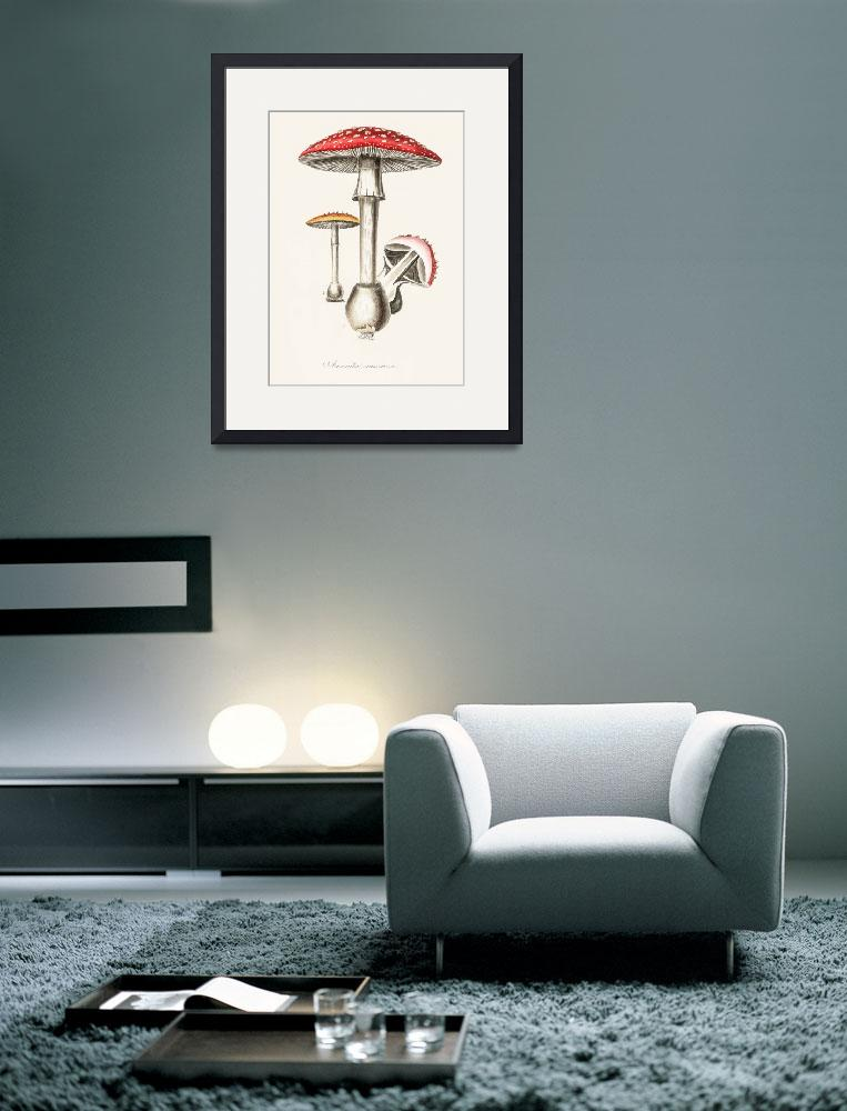 """""""Vintage Botanical Amanita muscaria&quot  by FineArtClassics"""