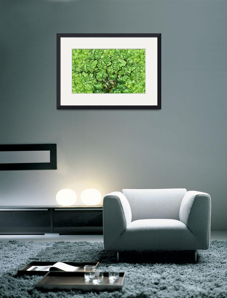 """""""Green Japanese Maple&quot  (2008) by ScovoPhoto"""