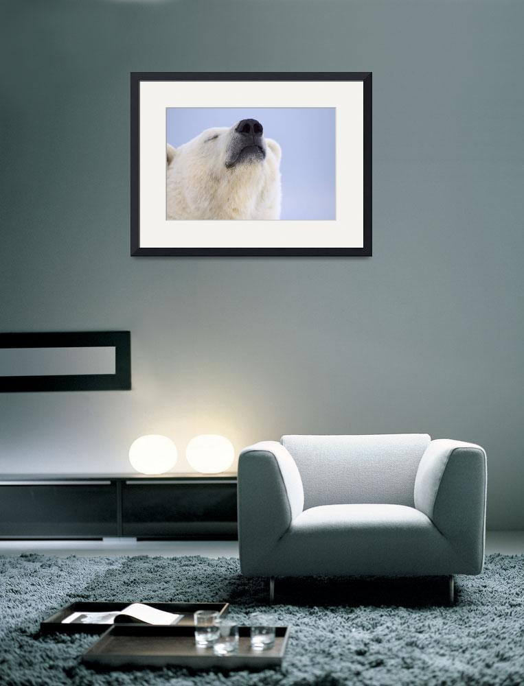 """Portrait of a adult polar bear in the Arctic Natio&quot  by DesignPics"