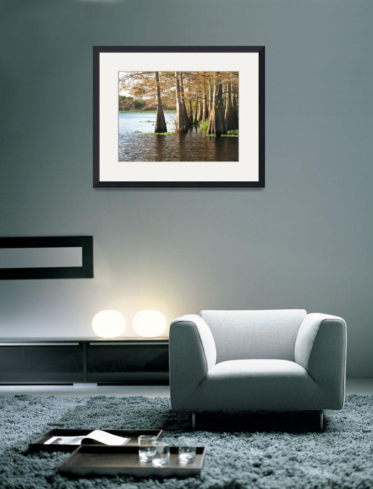 """""""Cypress Trees on the St. Johns River&quot  (2008) by marshbunny"""