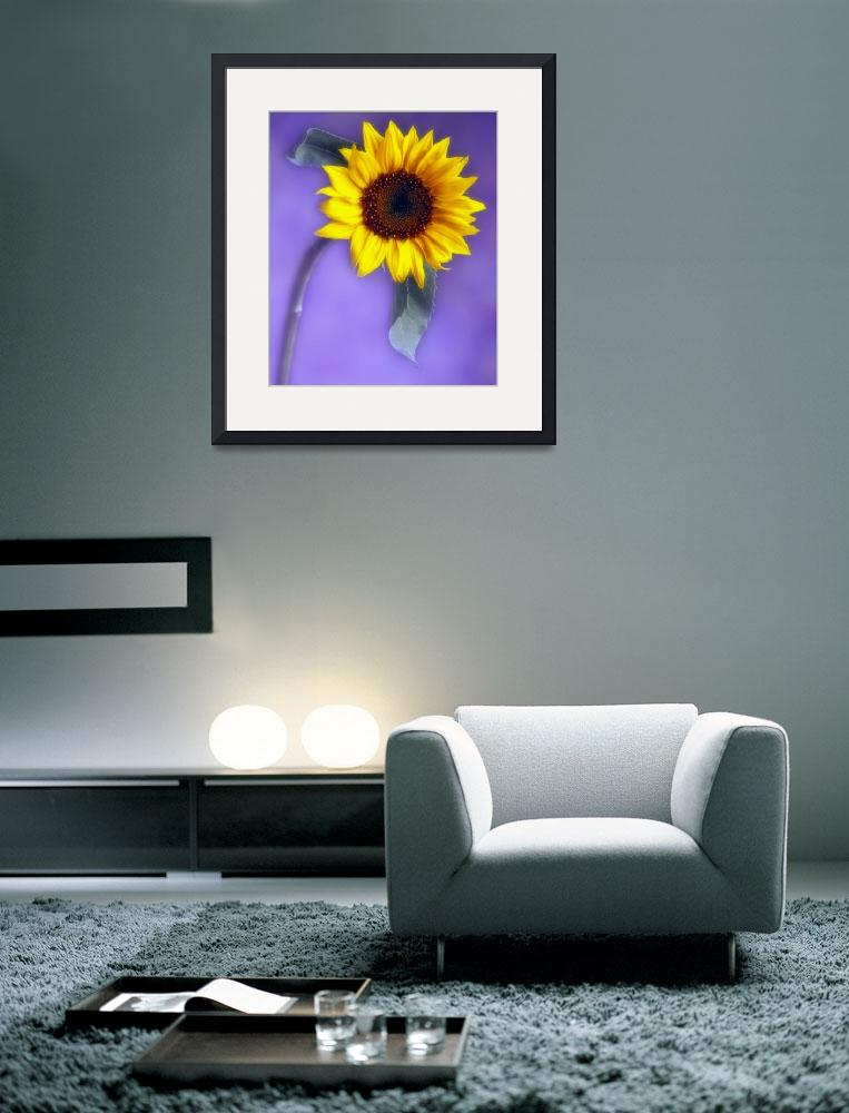 """sunflower #1""  by josephgerges"
