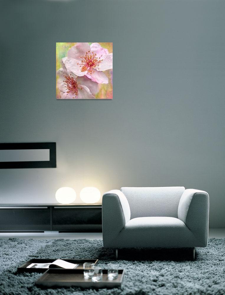 """Rose Essence""  (2011) by LeslieNicole"