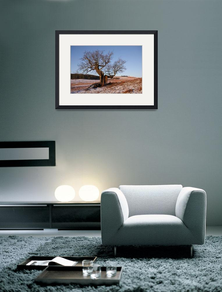 """""""Bradgate Park in Winter&quot  (2009) by AndyStafford"""