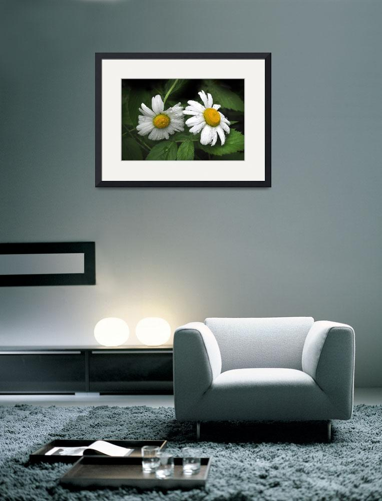 """Rain Daisies&quot  (2010) by LightWorks"