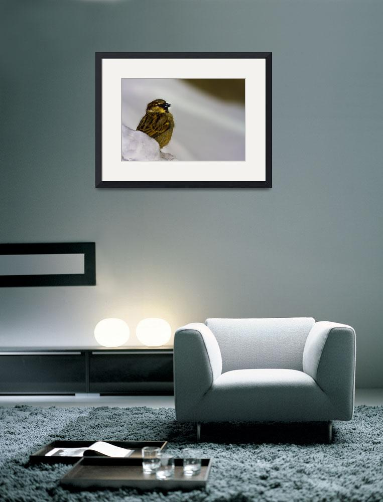 """""""sparrow and snow""""  (2009) by gashphotography"""