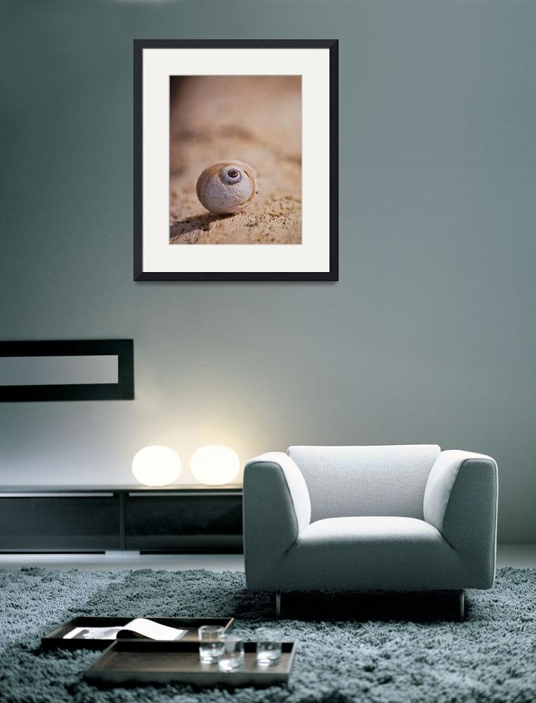 """Small Shell""  (2008) by NaturesExpressions"