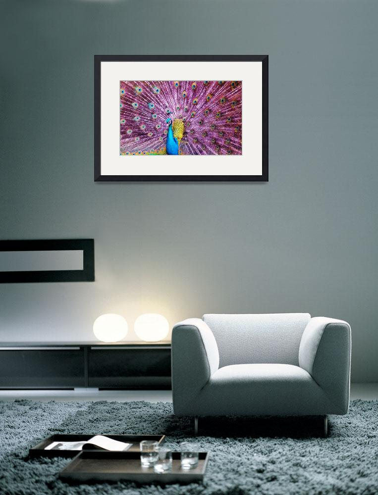 """""""Peacock&quot  (2013) by gallerymay"""