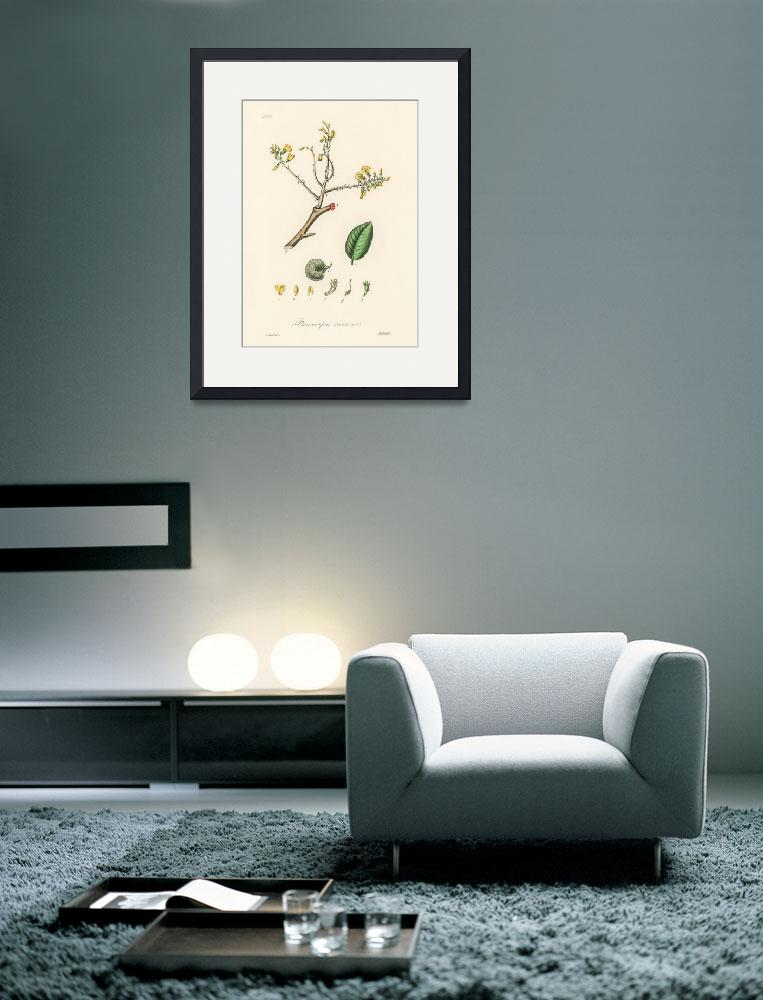 """Vintage Botanical Barwood&quot  by FineArtClassics"