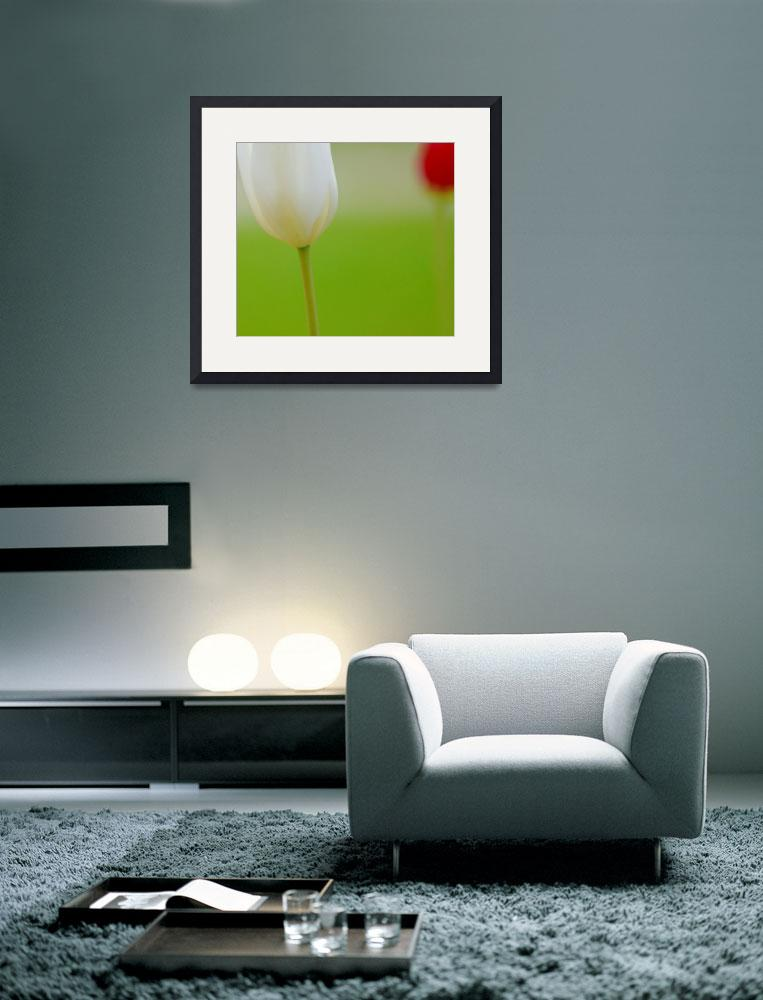 """""""White and Red Tulips&quot  (2014) by joanhan"""