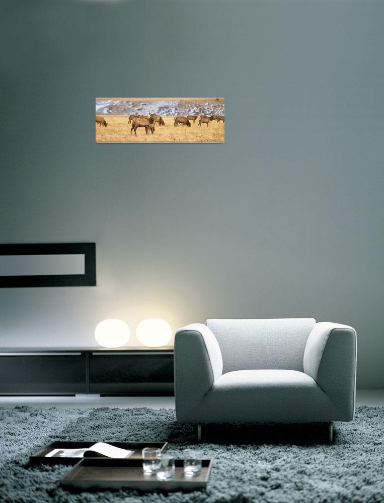 """Elk Heard Colorado Foothills Plains Panorama""  by lightningman"