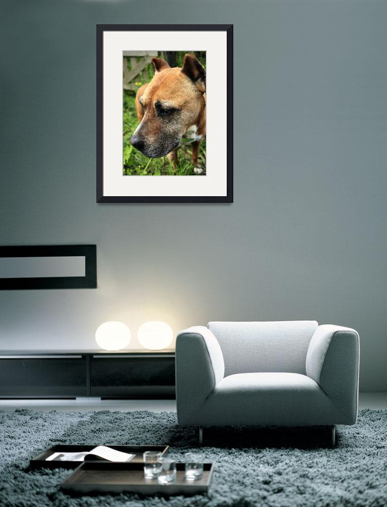 """""""Farm Dog&quot  (2009) by JessicaShellPhotography"""