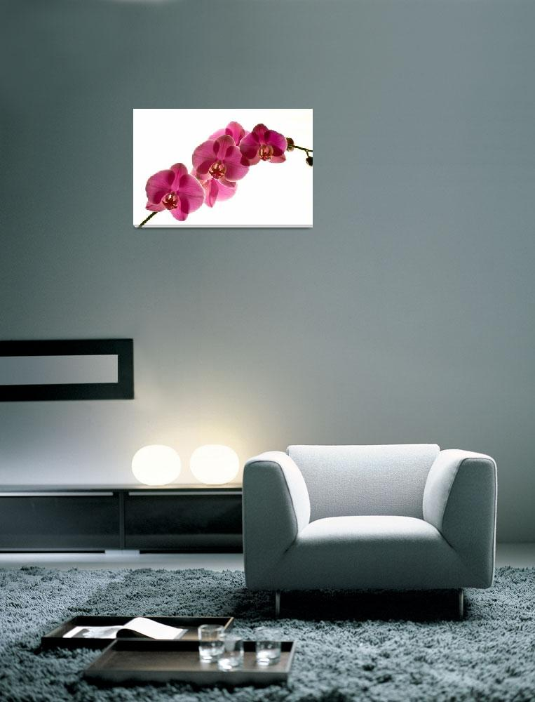 """""""ORCHID, IMAGE 699""""  (2011) by RWA"""