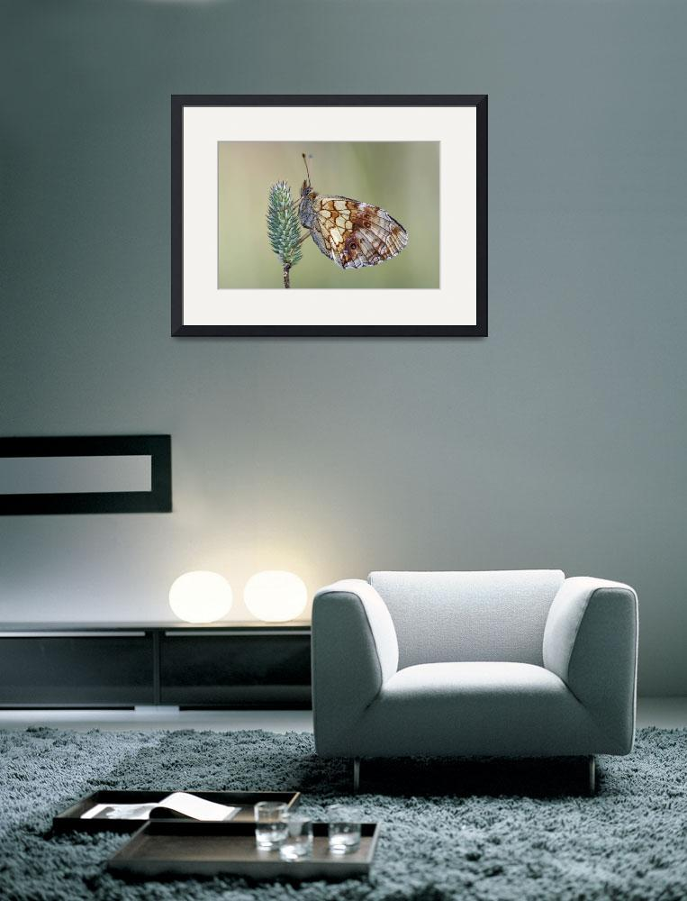 """""""butterfly""""  (2008) by lamich"""