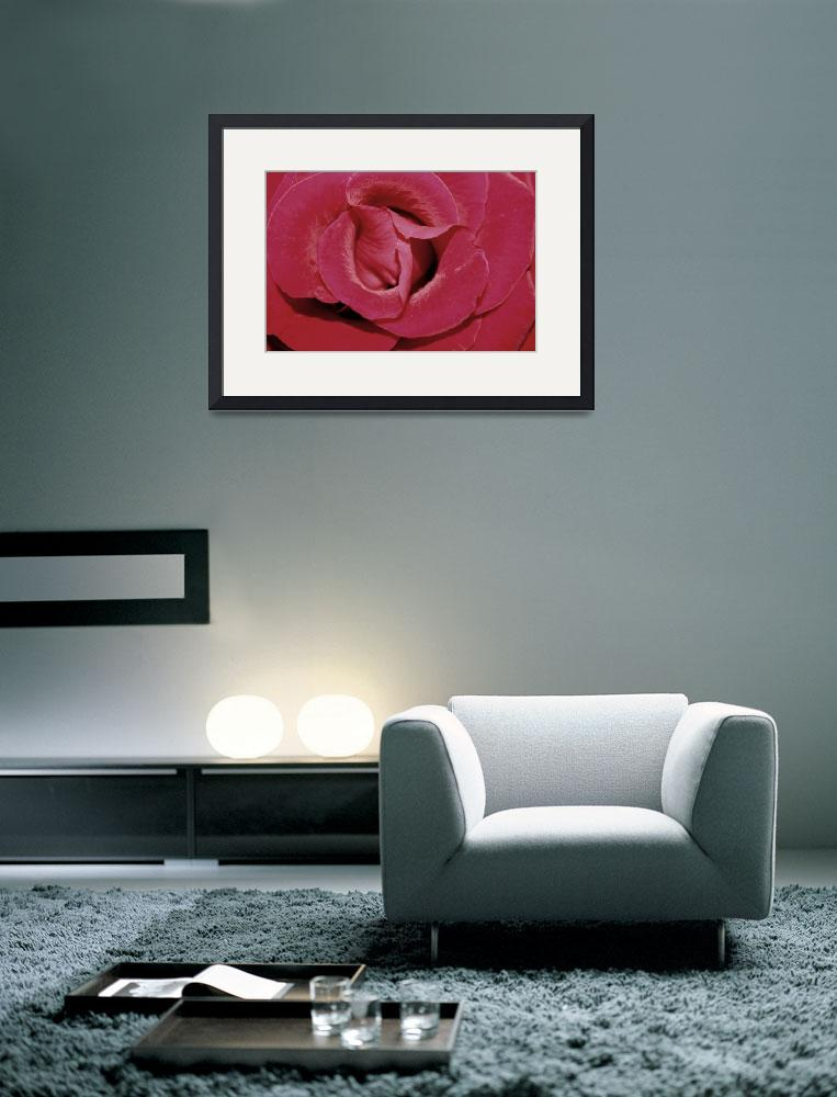 """""""Floral-Rose 3&quot  (2008) by willifindunow"""