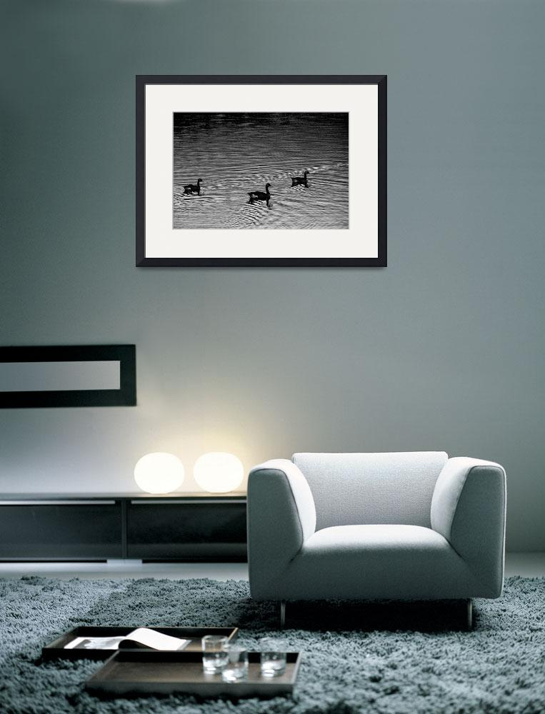 """""""Three Geese&quot  (2006) by brianauer"""