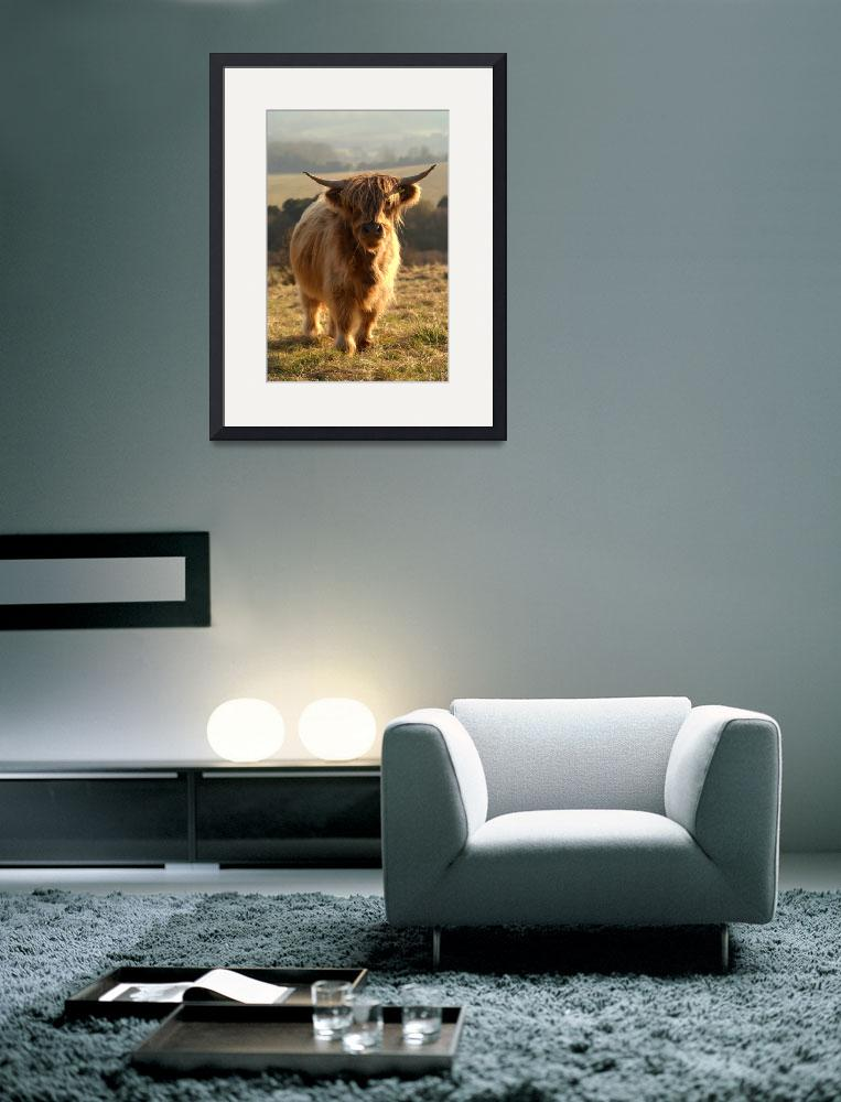 """Young Highland Cow&quot  by Serena"