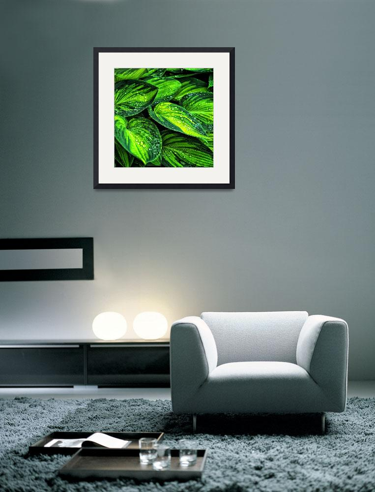 """""""Beautiful green leaf with waterdrops&quot  by PositiveImage"""