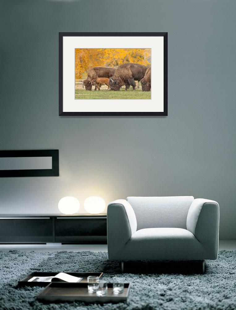 """""""Bison Family Nation&quot  (2017) by lightningman"""