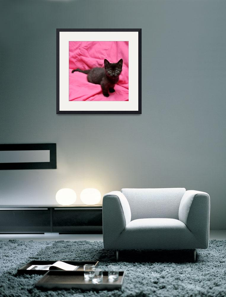 """Pink Kitten&quot  (2009) by ldfranklin"