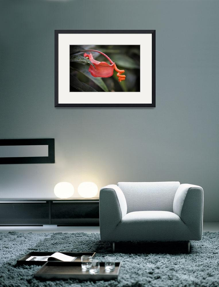 """""""Red Orchid&quot  (2013) by JohnnyStevens"""