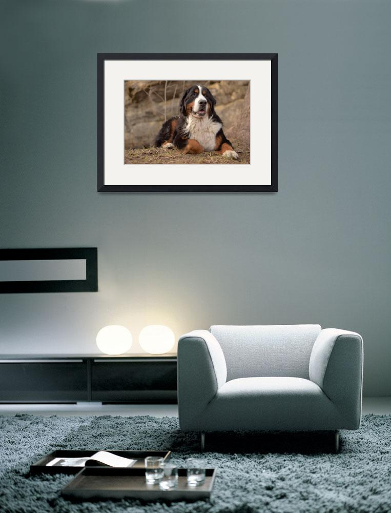 """""""Bernese Mountain Dog&quot  (2011) by FotoFlaunt"""