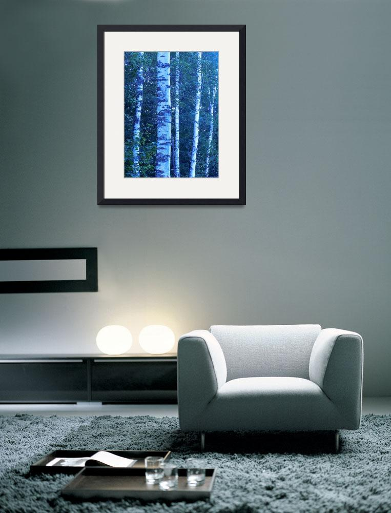"""""""Birch Trees 1&quot  (2011) by ShaneWells"""