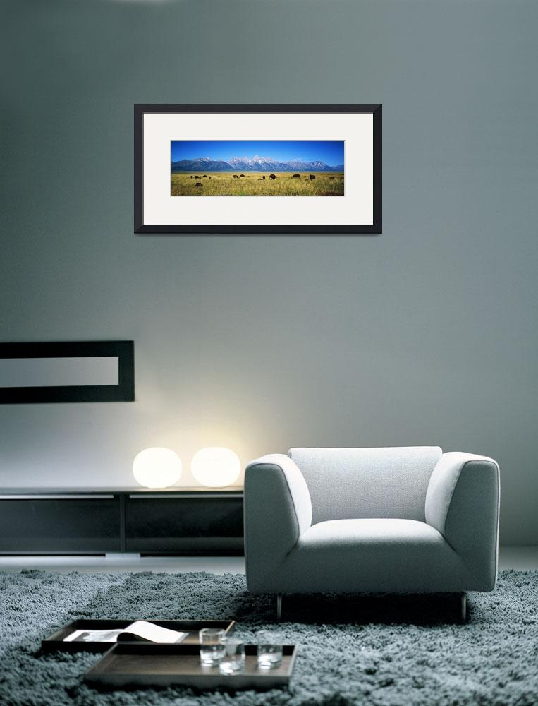 """""""Field of Bison with mountains in background&quot  by Panoramic_Images"""