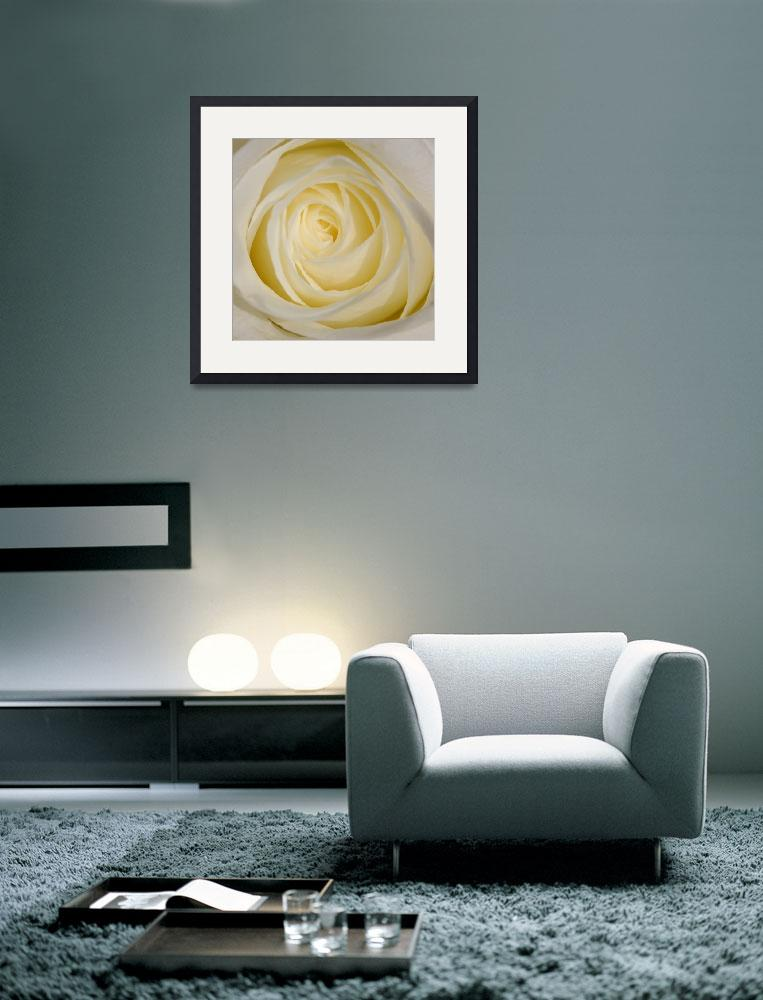 """""""Rose 1 10x10""""  by snaphappy"""