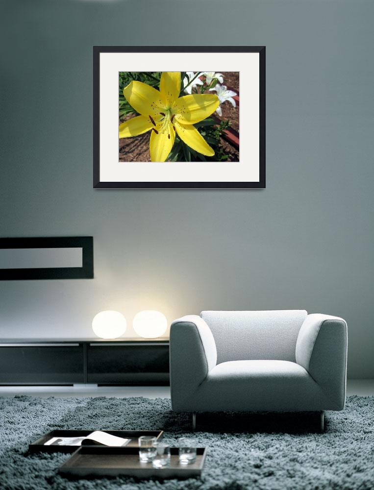 """""""Yellow and Whtie Lilies&quot  (2011) by johnscanvassprints"""