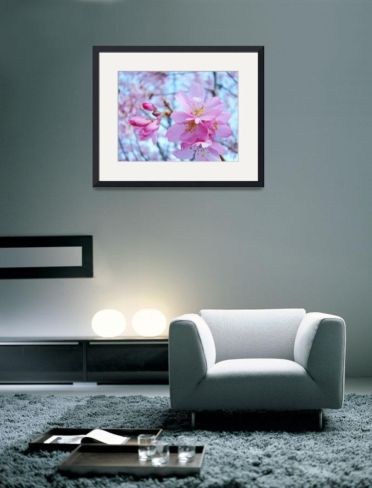 """""""Pink Spring Flower Blossoms&quot  (2011) by BasleeTroutman"""