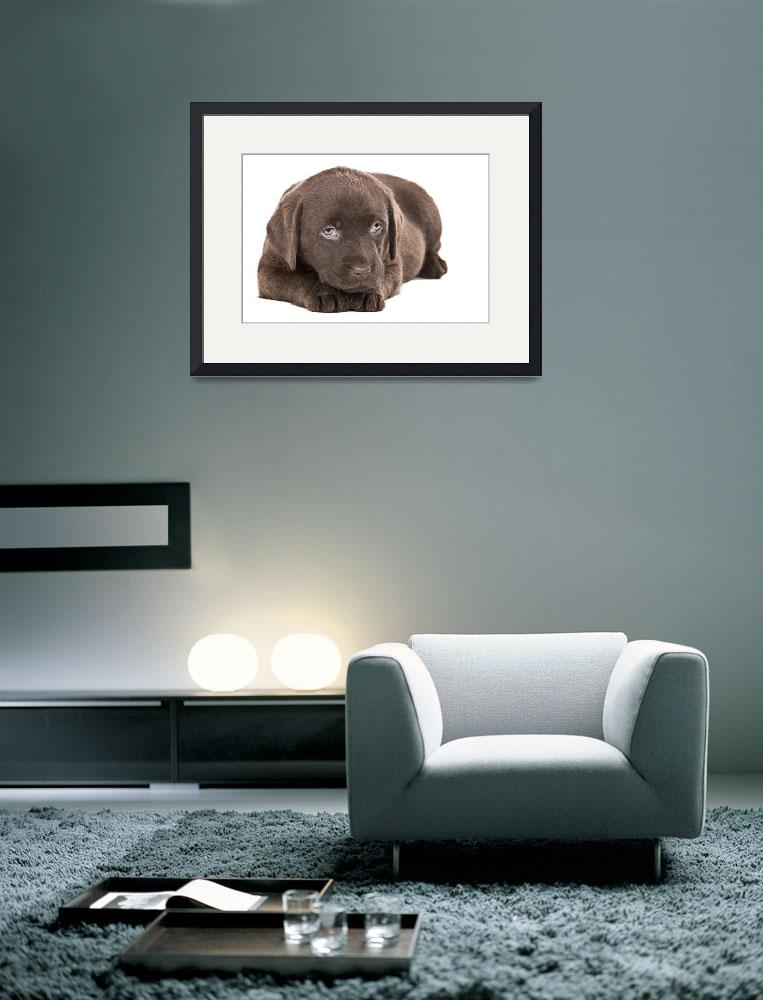 """Cute Chocolate Labrador Puppy&quot  (2009) by jmpaget"