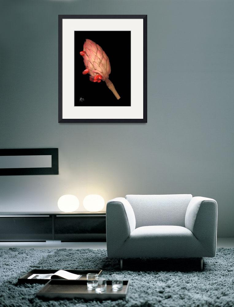 """Magnolia Seed Pod with Red Seeds&quot  by DouglasGriffin"