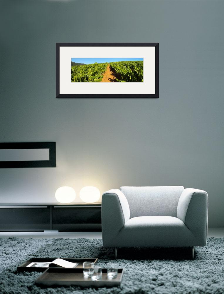 """""""Provence vineyard panoramic landscape&quot  (2007) by frenchlandscapes"""