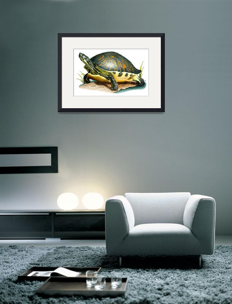 """""""Florida Cooter""""  (2009) by inkart"""