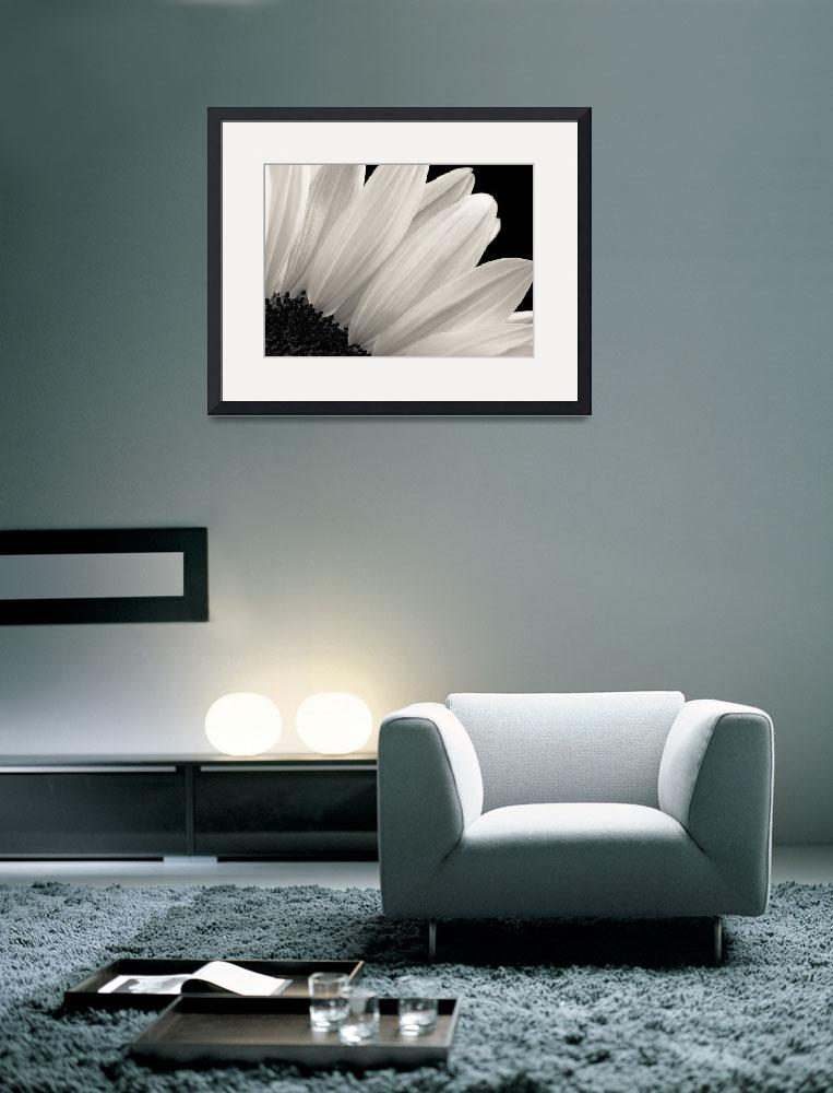 """Monochrome Sunflower&quot  (2009) by darinrogers"