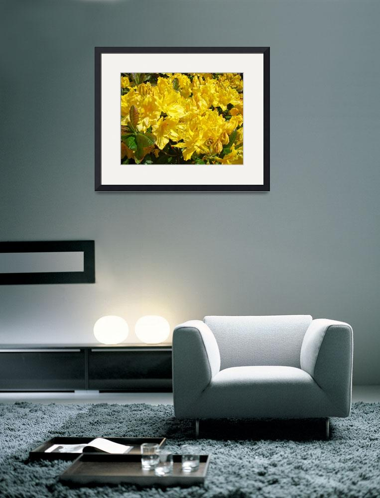 """Floral Art Prints Yellow Rhododendron Rhodies&quot  (2010) by BasleeTroutman"