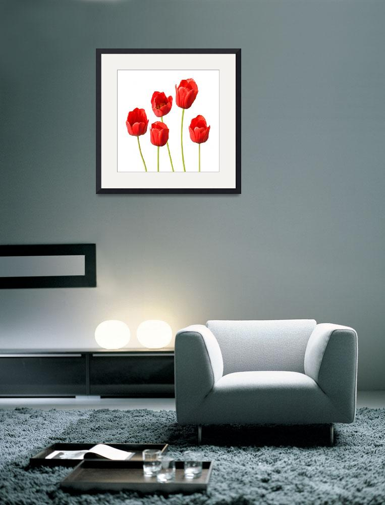 """""""Red Tulips White Background Wall Art&quot  (2012) by NatalieKinnear"""