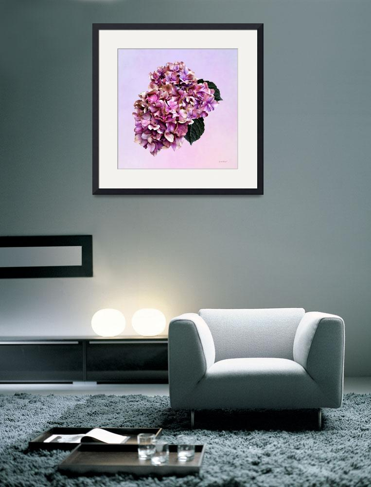 """Hydrangeas - Pink and Purple Hydrangea&quot  by susansartgallery"